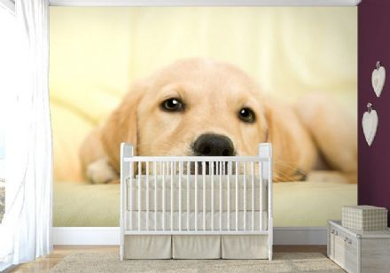Golden retriever puppy dog wall mural